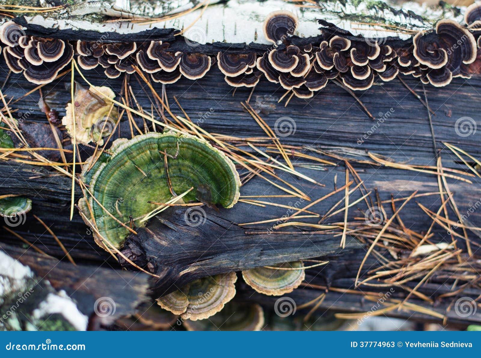 Nature background of mushrooms