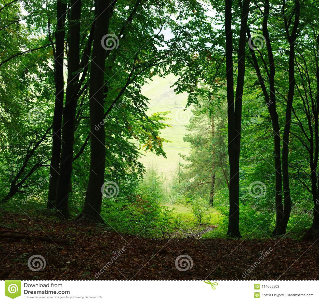 Nature Background Summer Misty Green Forest Stock Image - Image of