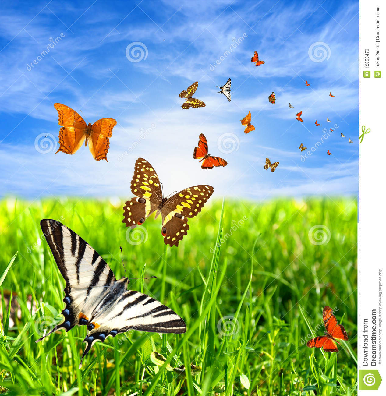 Beautiful Nature And Birds Designs For Living Room: Nature Beauty Stock Photo. Image Of Nature, Butterfly