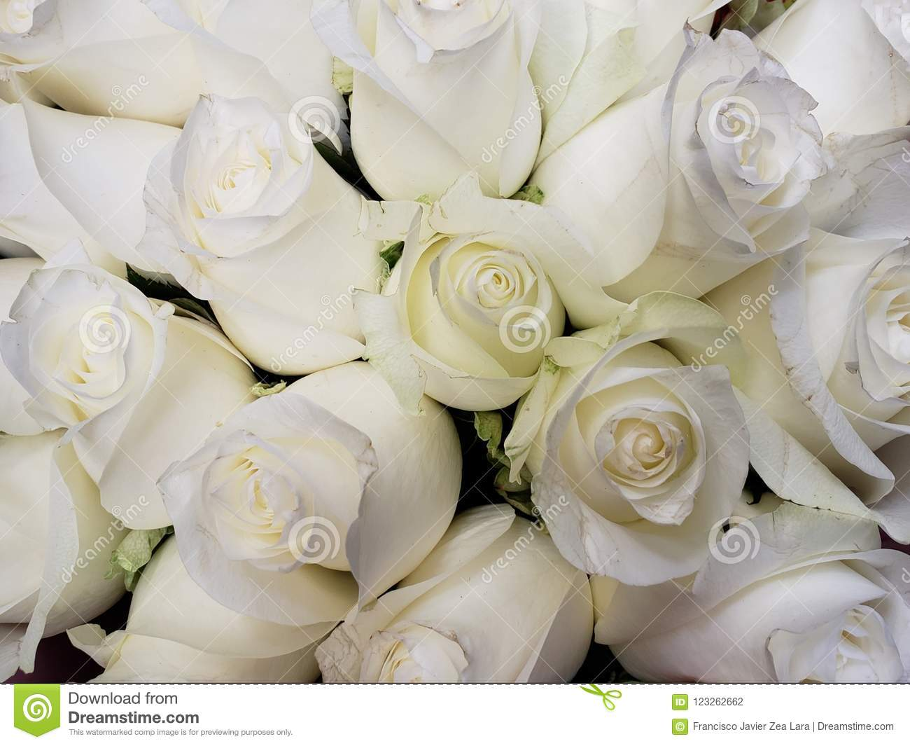 White Rose Flowers In A Floral...