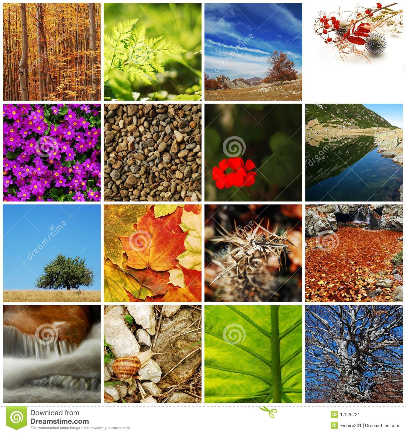 Nature Collage Stock Image Image 17226731