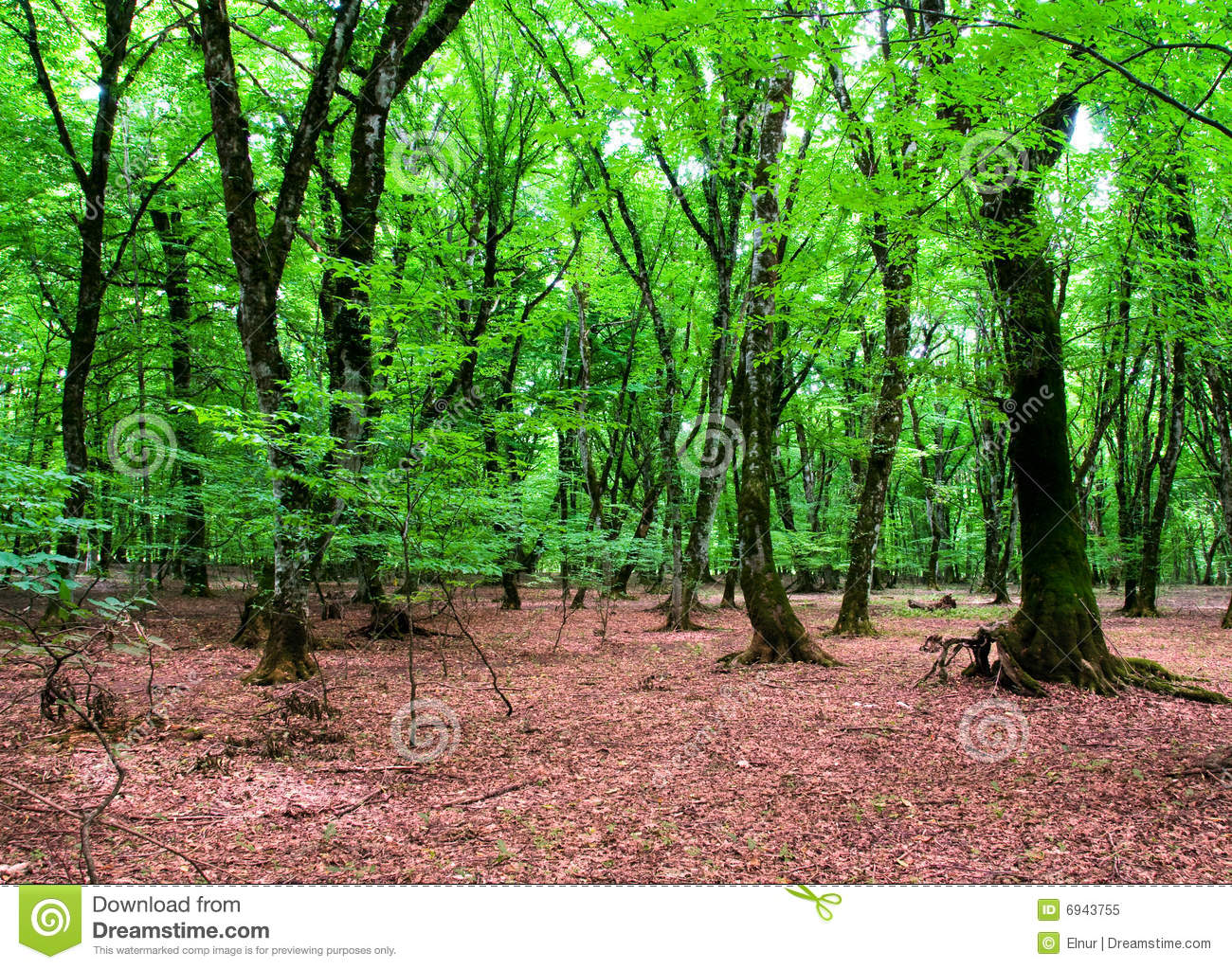 Nature concept - Green forest