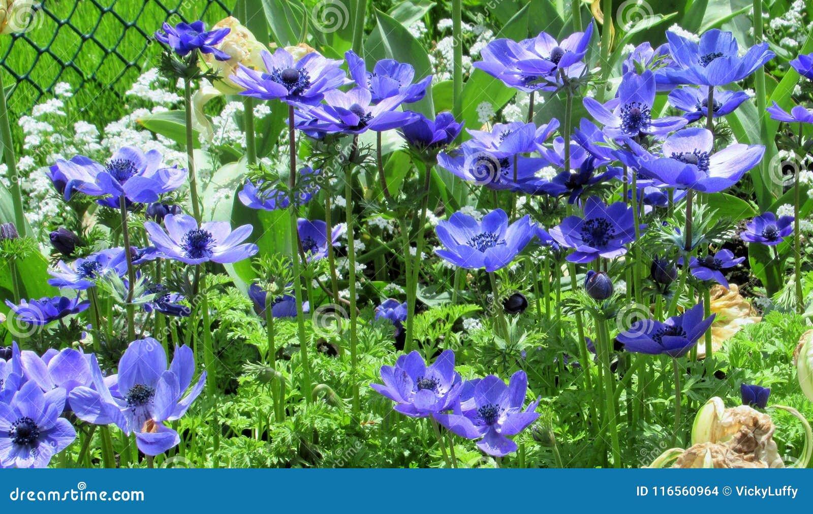 Nature Dans La Ville : Vue Lumineuse Des Fleurs Bleues Dans Un ...