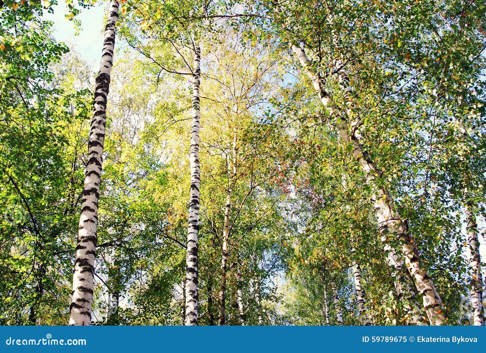 Nature de ville de ples de la russie et de la volga for La ville nature