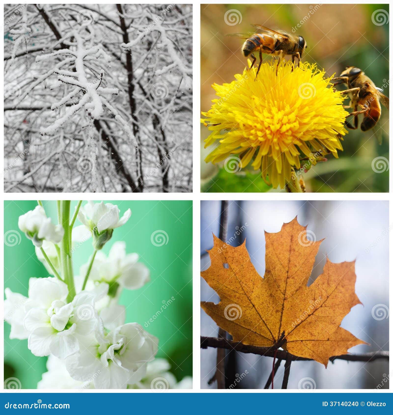 Nature en hiver printemps t et automne collage photo stock image 37140240 - Printemps ete automne hiver et printemps ...