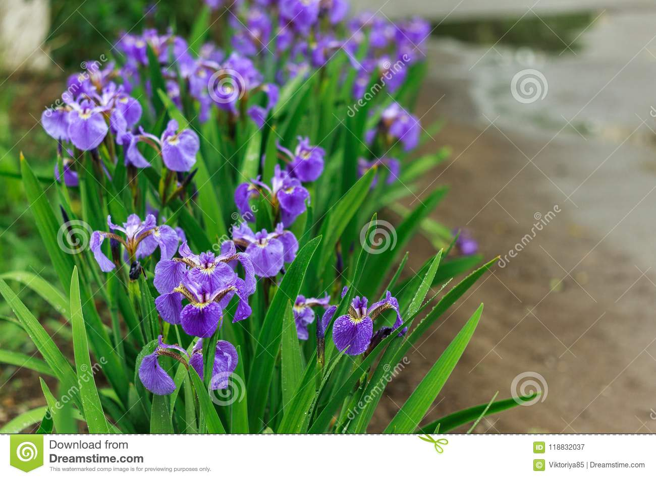 Nature Of The Far East Perennial Plants Flowers Nature In Early