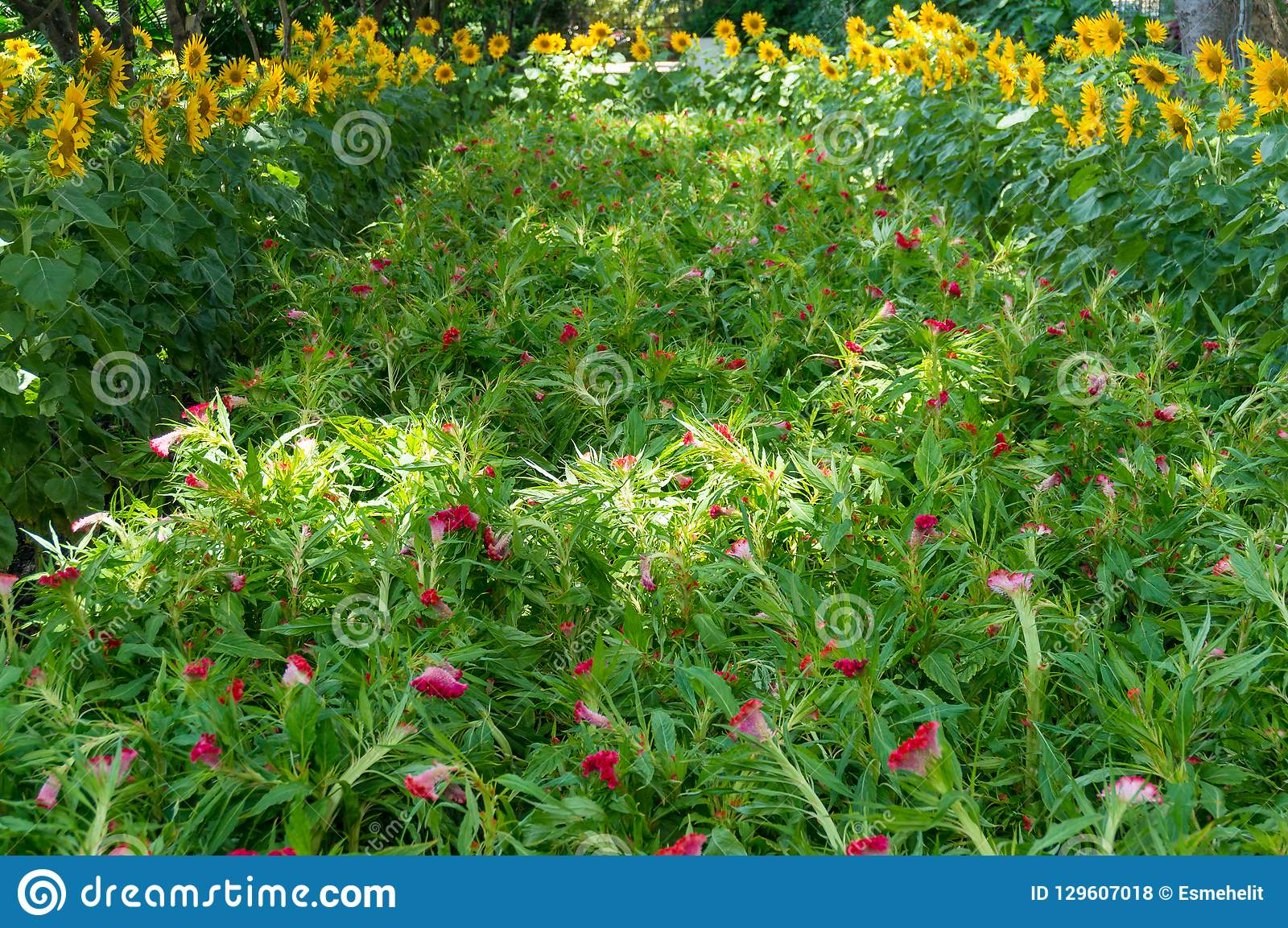 Nature floral background of lush green leaves and exotic red flo