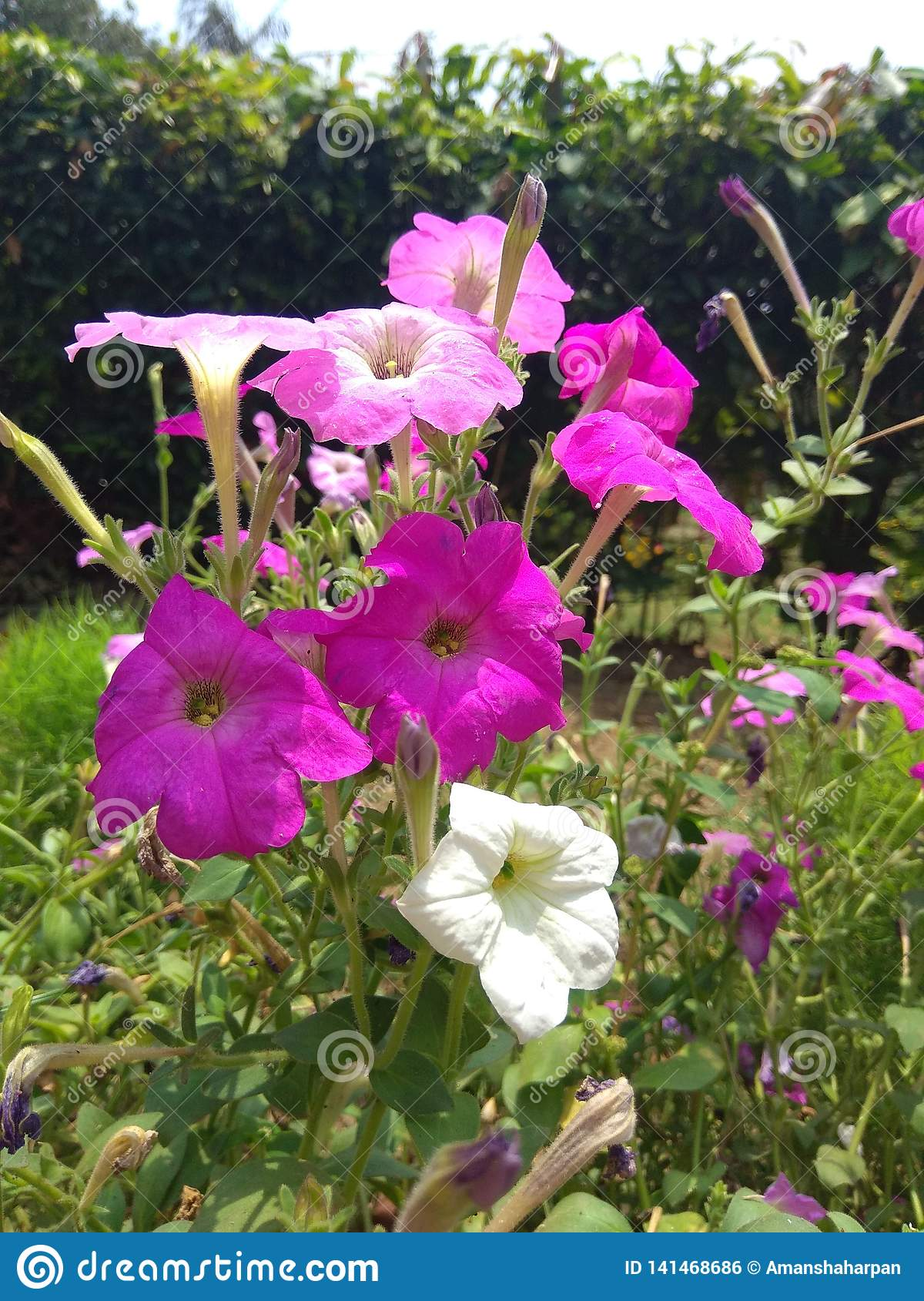Nature, Flowers, Wallpaper Flowers Stock Photo - Image of