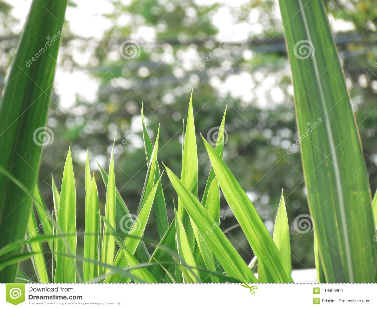 Nature Grasses Background Grasses Of Different Sizes Large Grasses