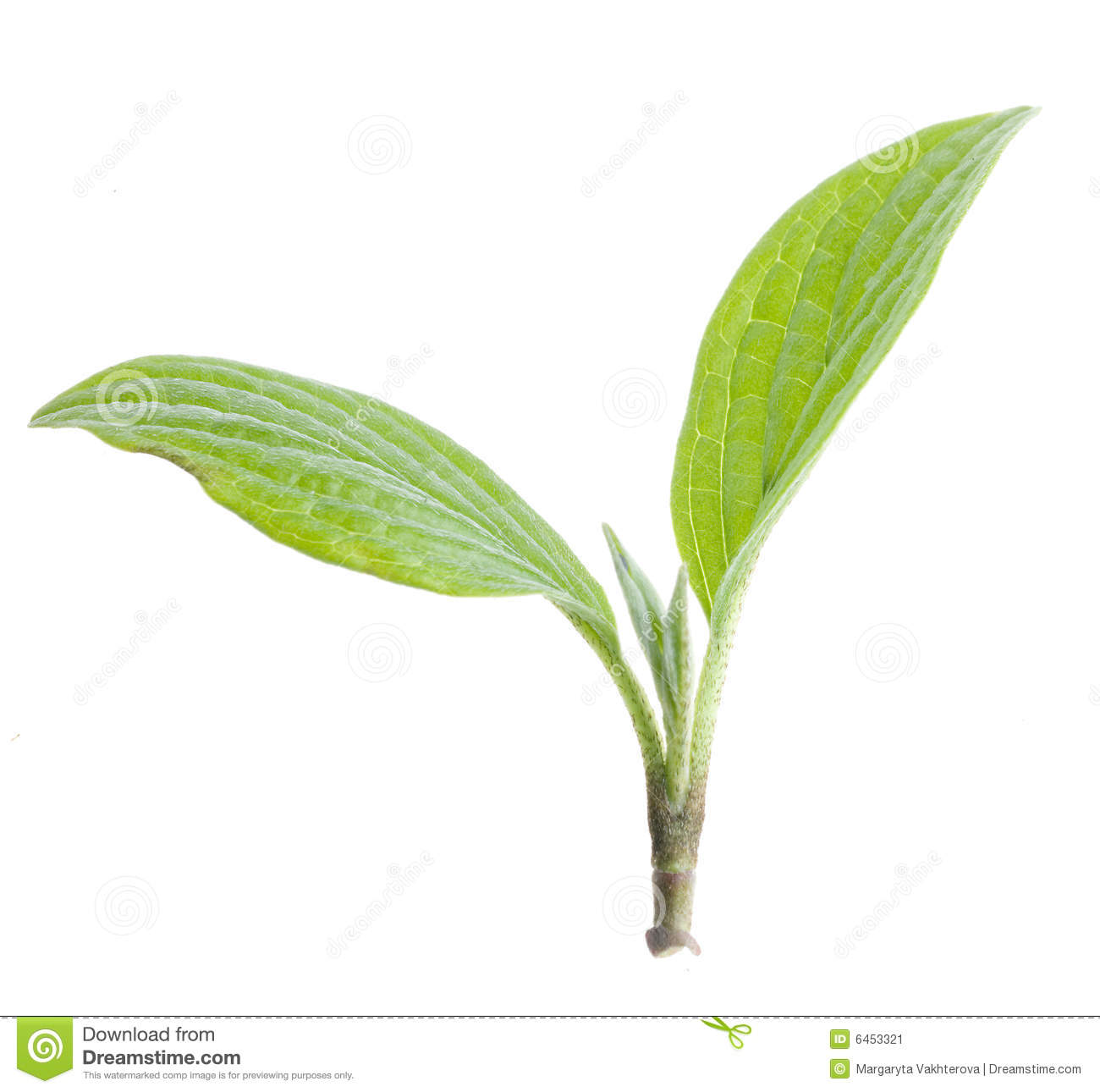 Nature green leaf isolated