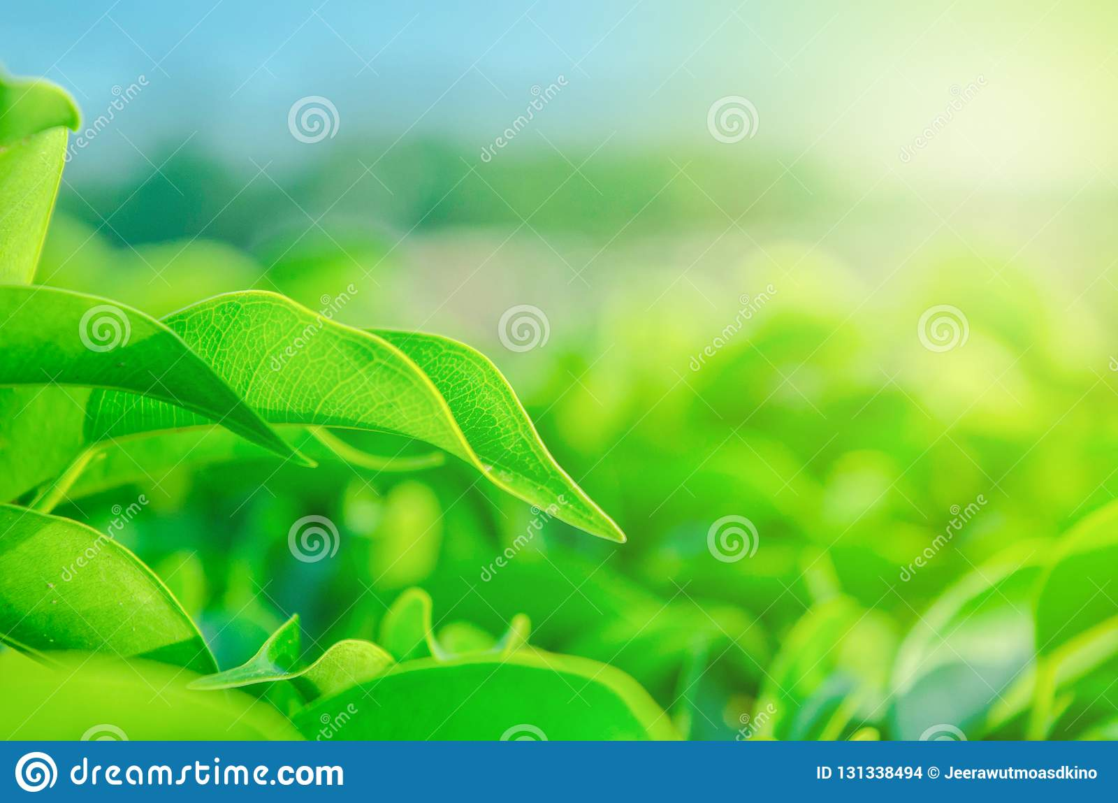 Nature Of Green Leaves For Wallpaper Or Background Stock