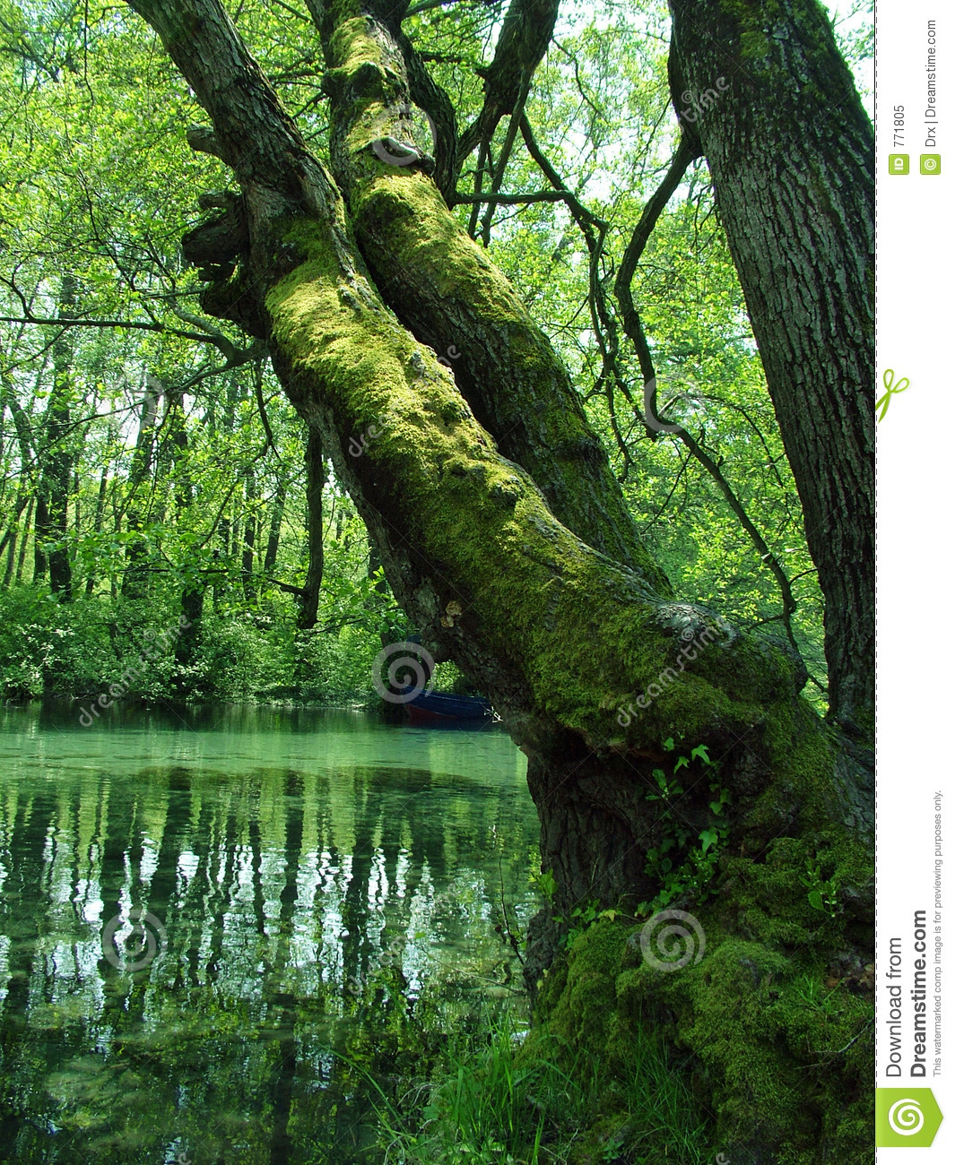 Free Stock Nature Photos Nature green swamp
