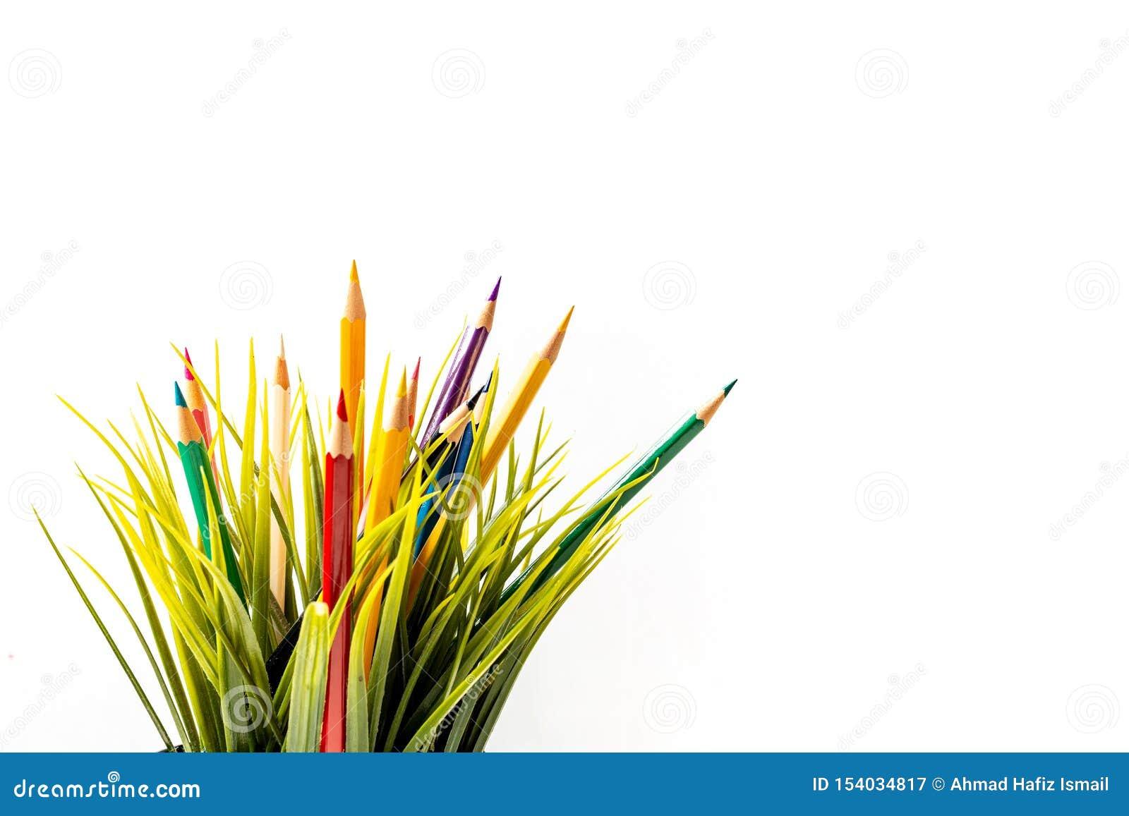 Nature Growth - Still Life Conceptual