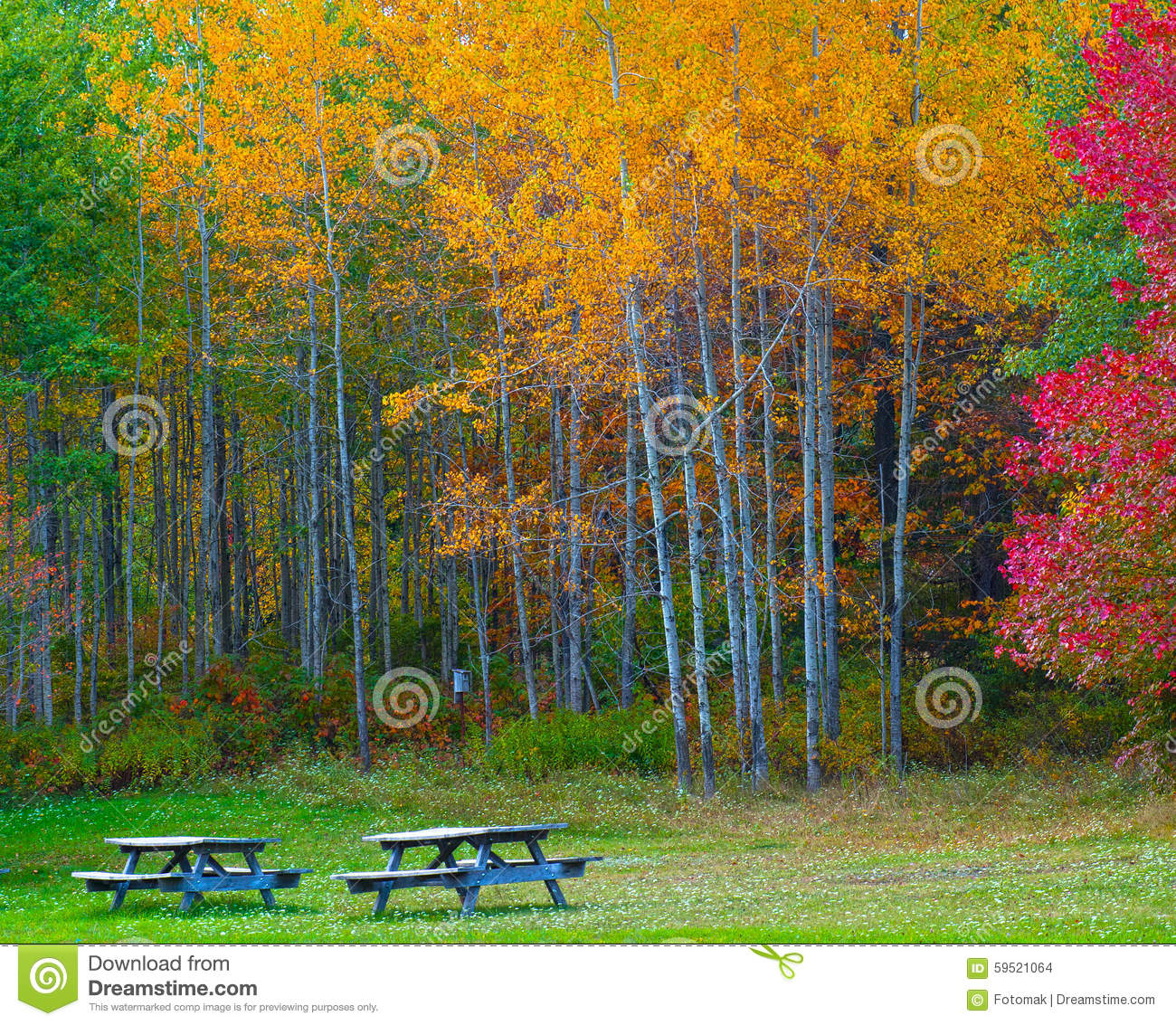 Nature landscape, Trees changing colors during autumn in a forest park