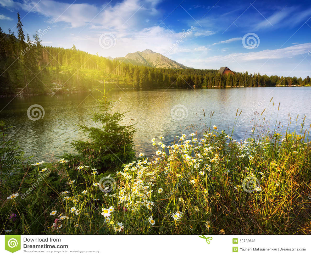 Nature mountain scene with camomiles and lake