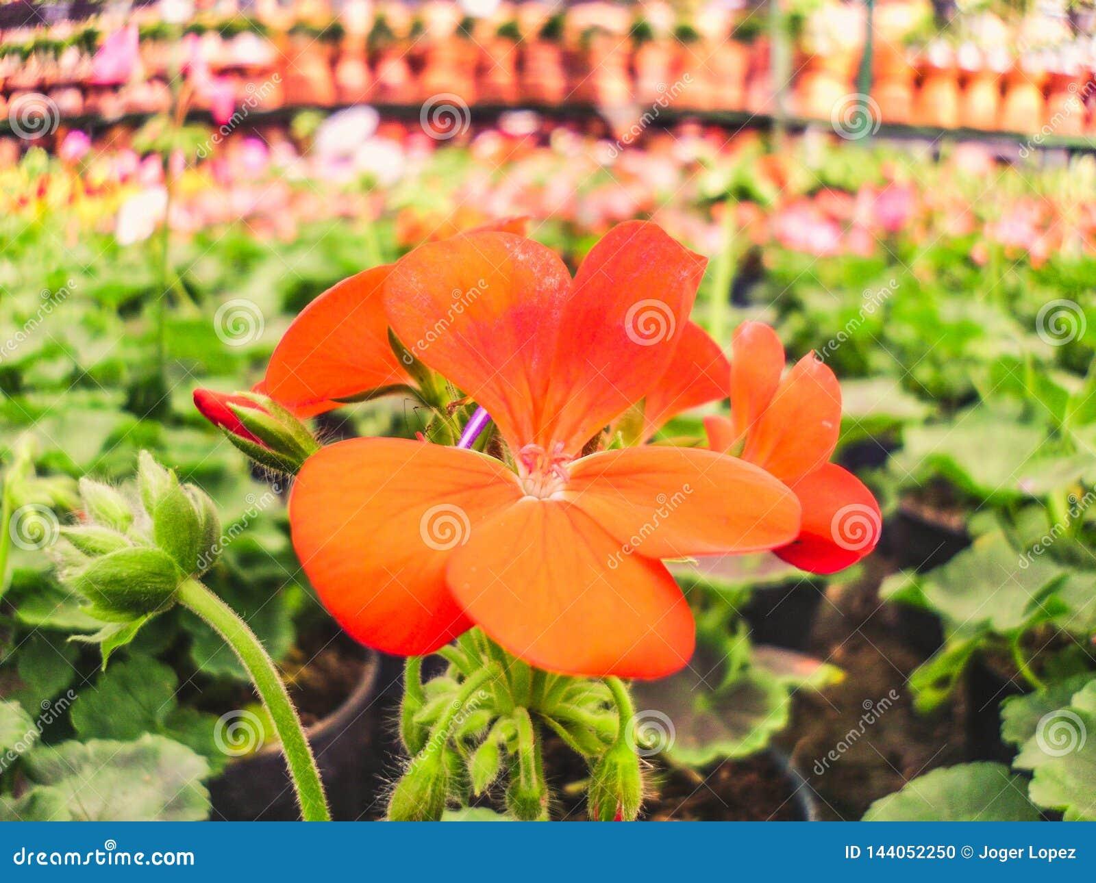 Nature orange et verte