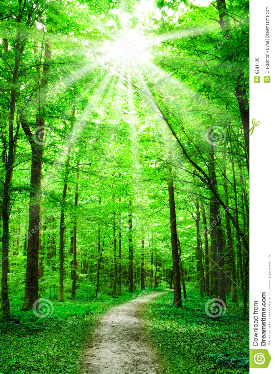 Nature Path In Forest With Sunshine Stock Photo Image