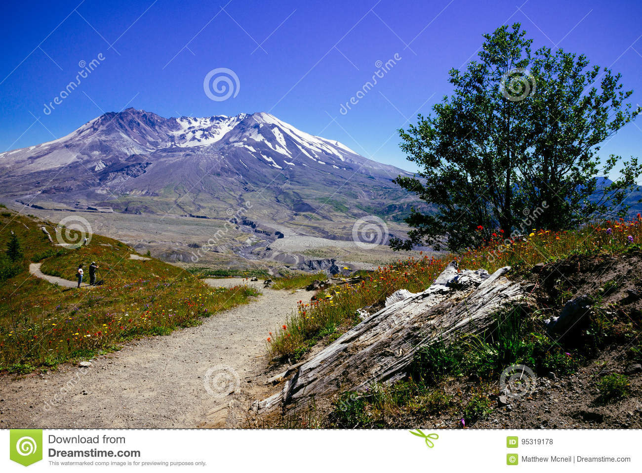 Nature Path to Mount St. Helens