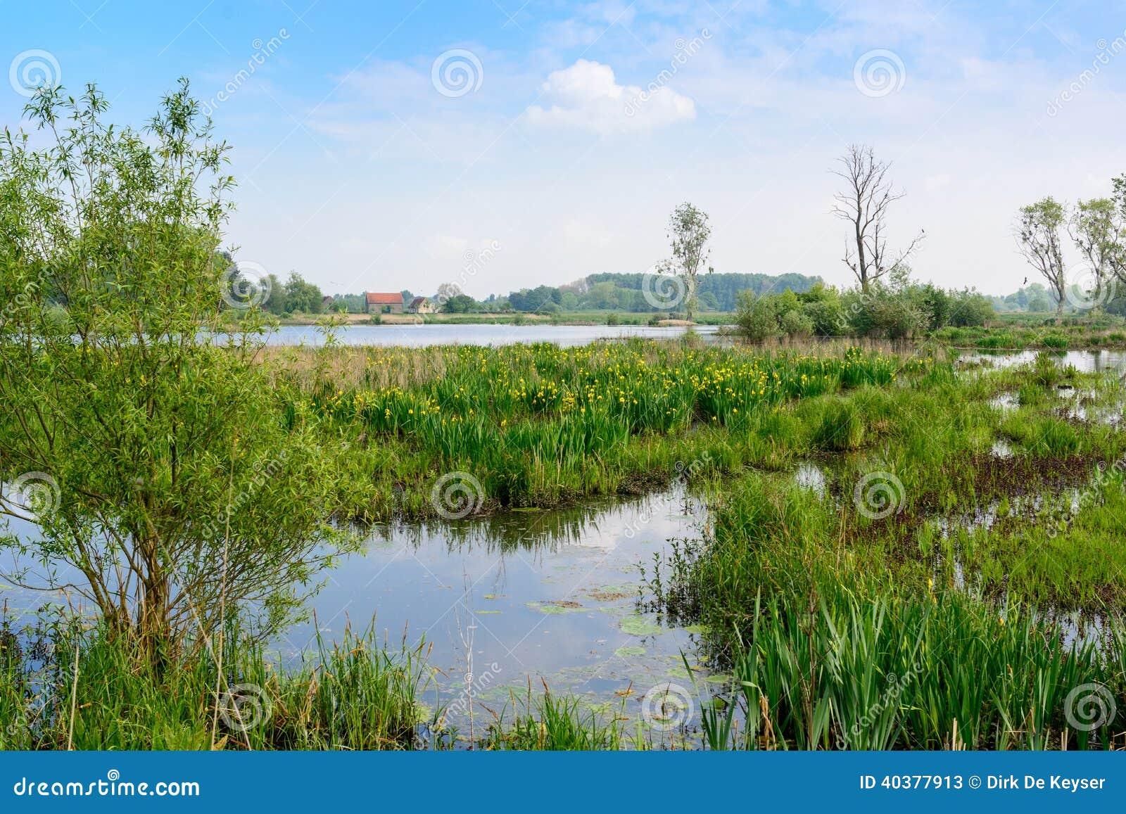 Nature reserve Bourgoyen in Ghent, Belgium