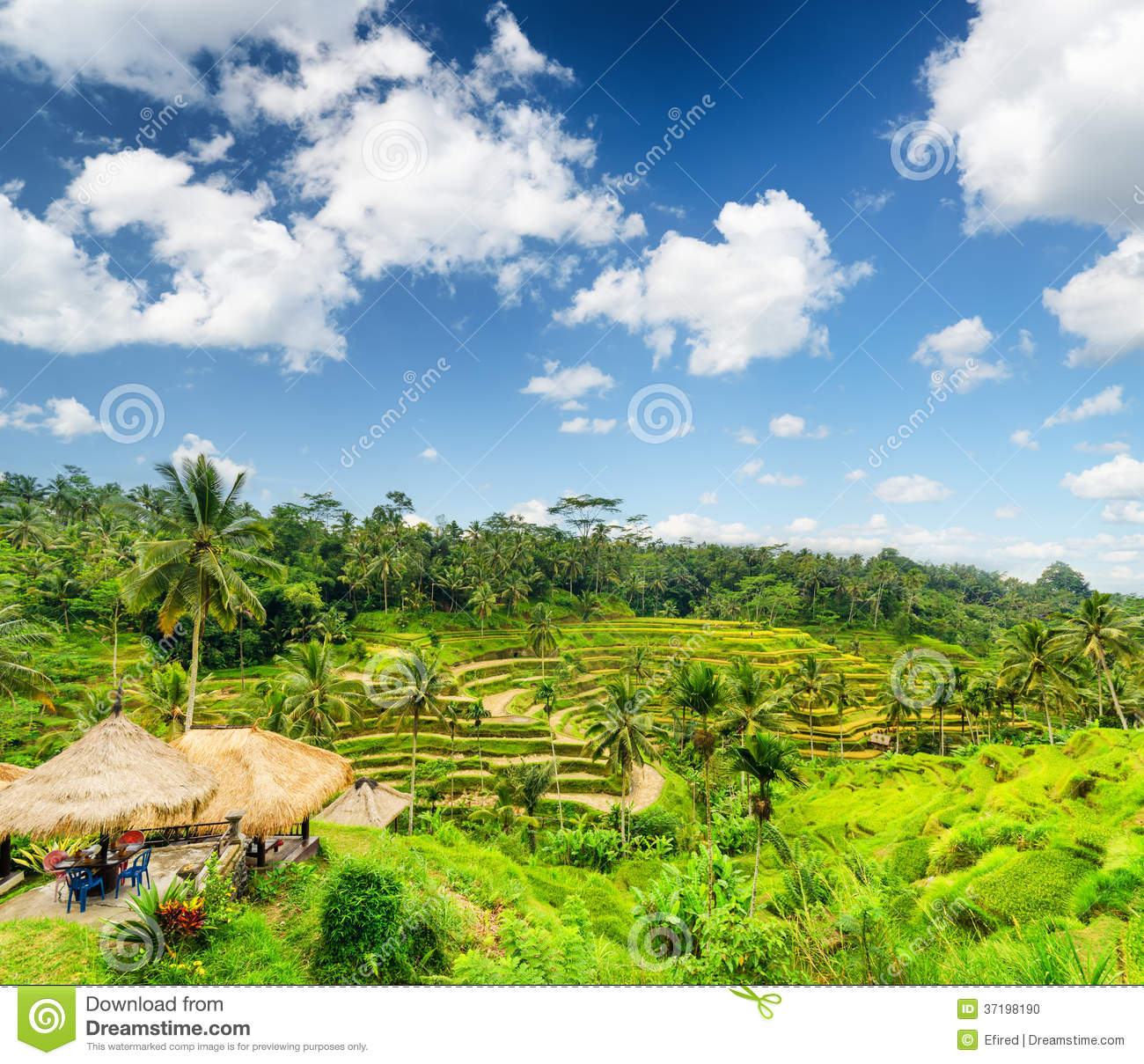 Rice terrace of bali island stock photo image 37198190 for Terrace nature