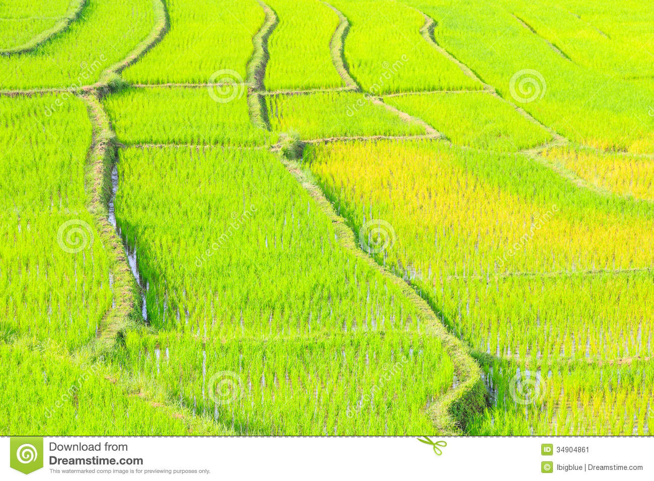 Nature of rice terrace thailand stock image image 34904861 for Terrace nature