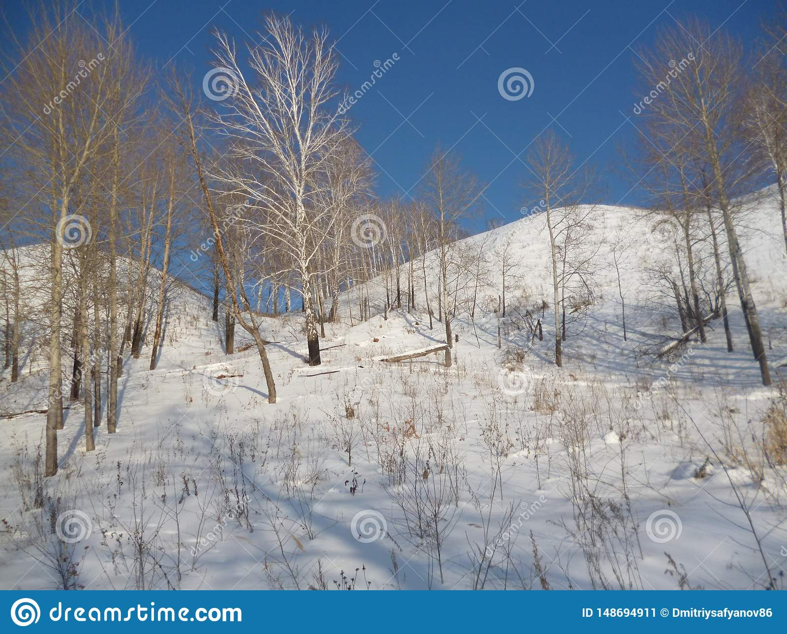 Nature Russia view of the mountain forest .