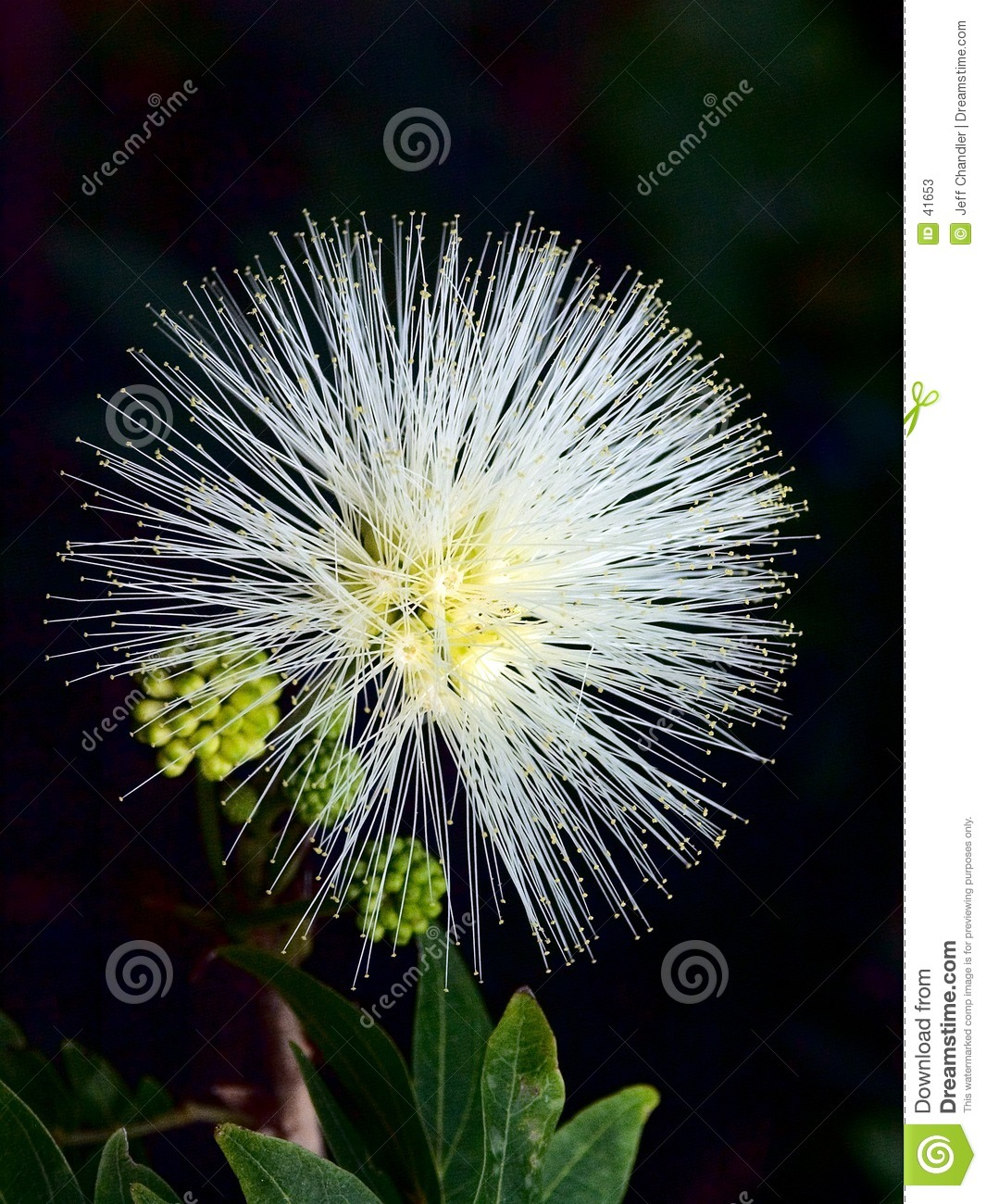 Nature s Fireworks