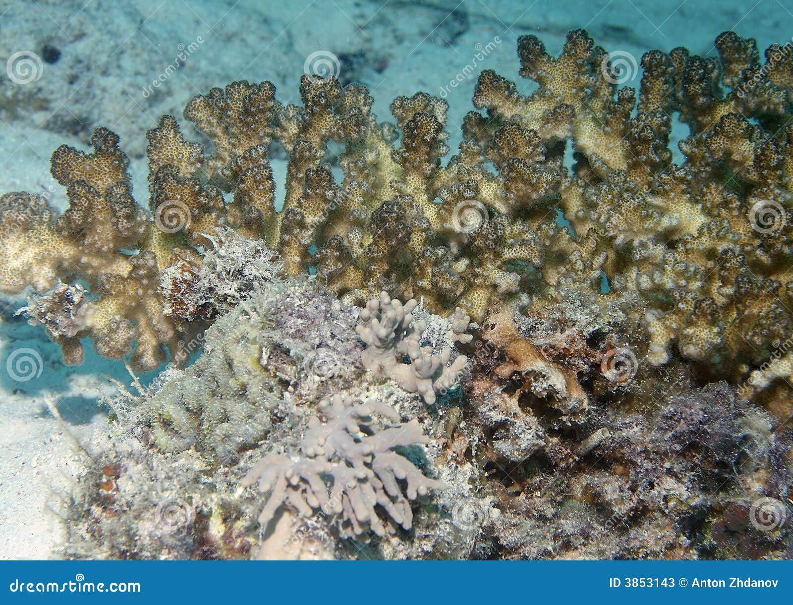Nature sous-marine