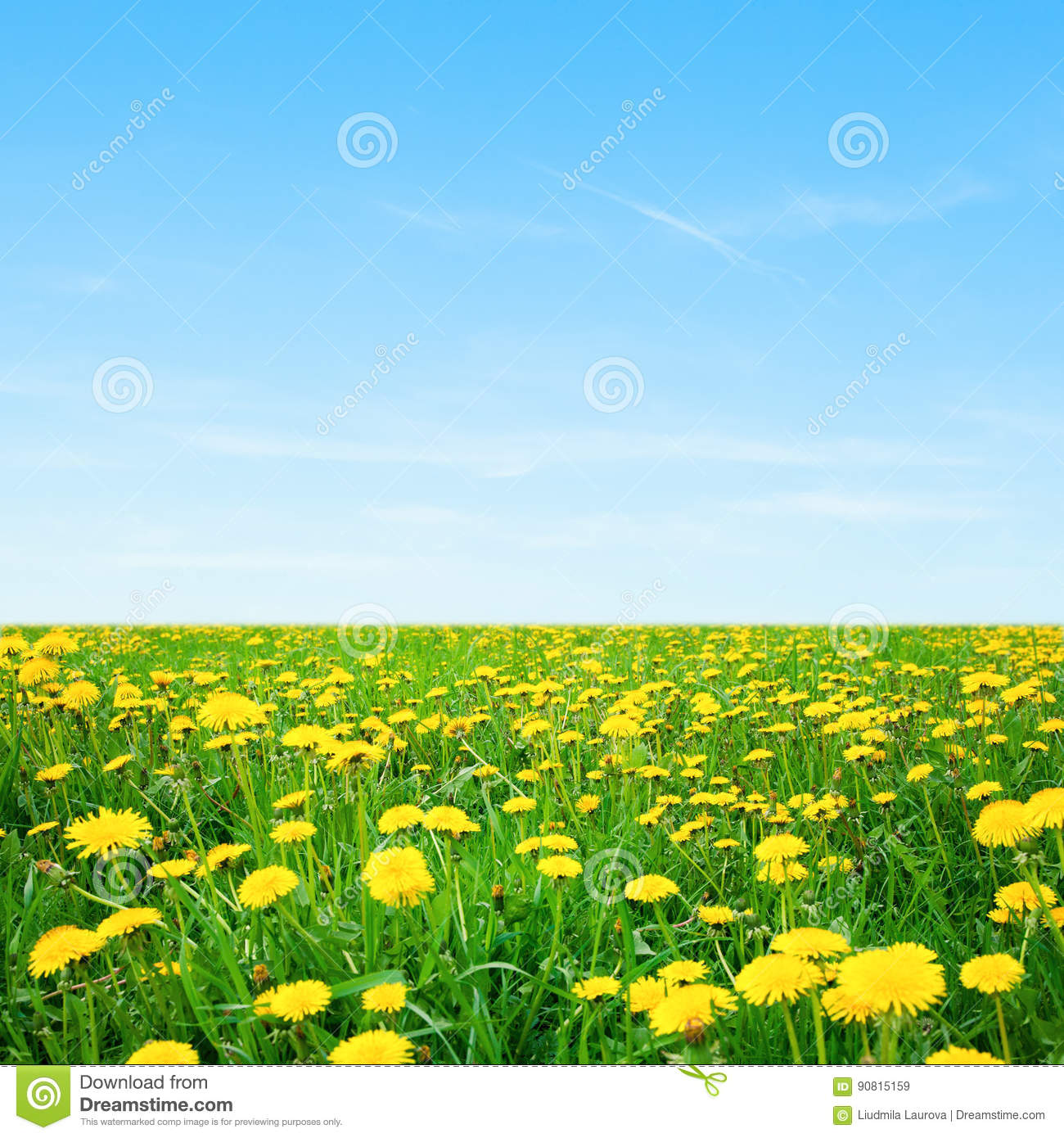 Nature Spring Wallpaper With Blossoming Dandelion Stock