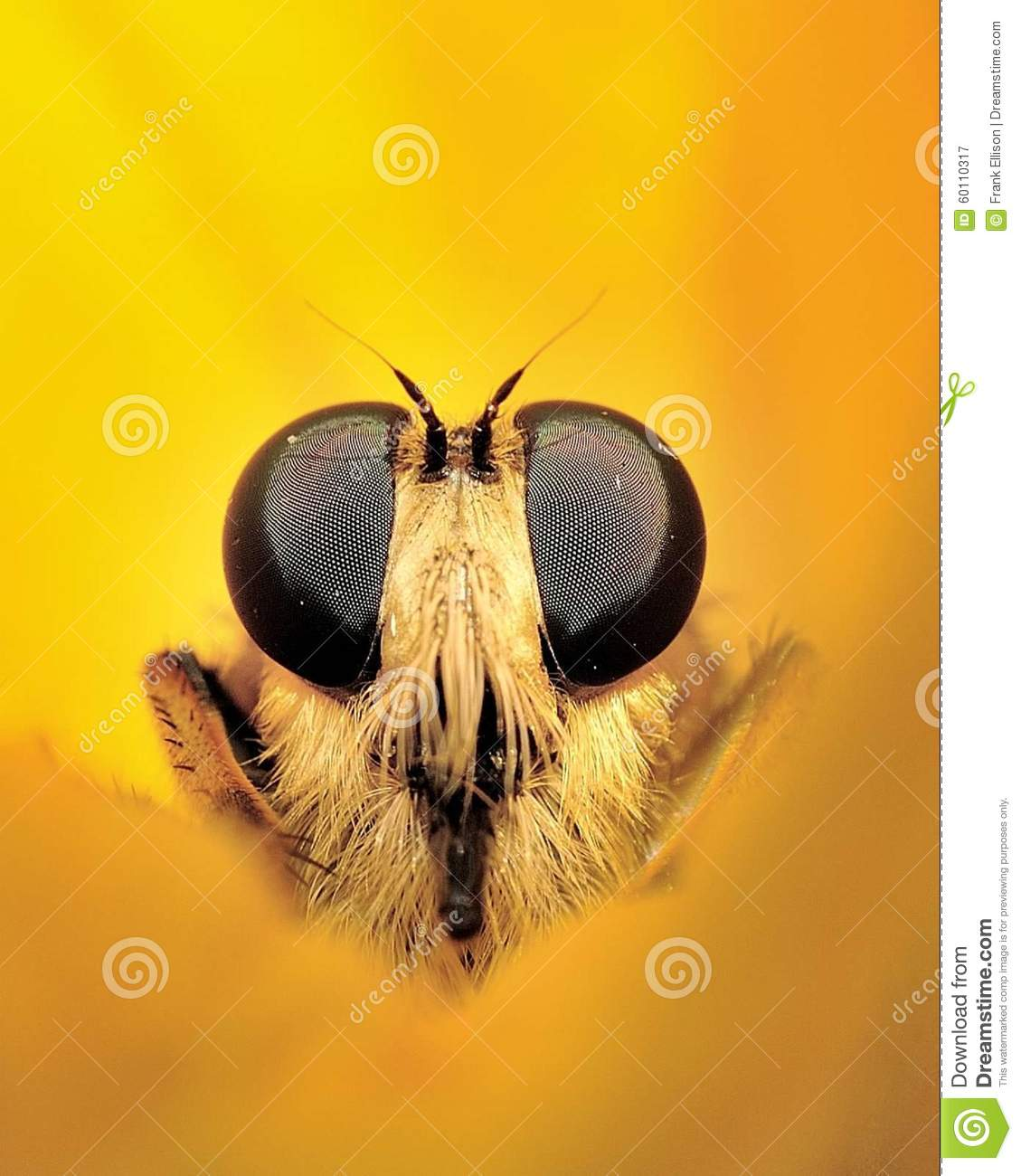 Toriko Surrounded By Bugs Jpg: Nature Surrounded Stock Image. Image Of Assassin, Hair