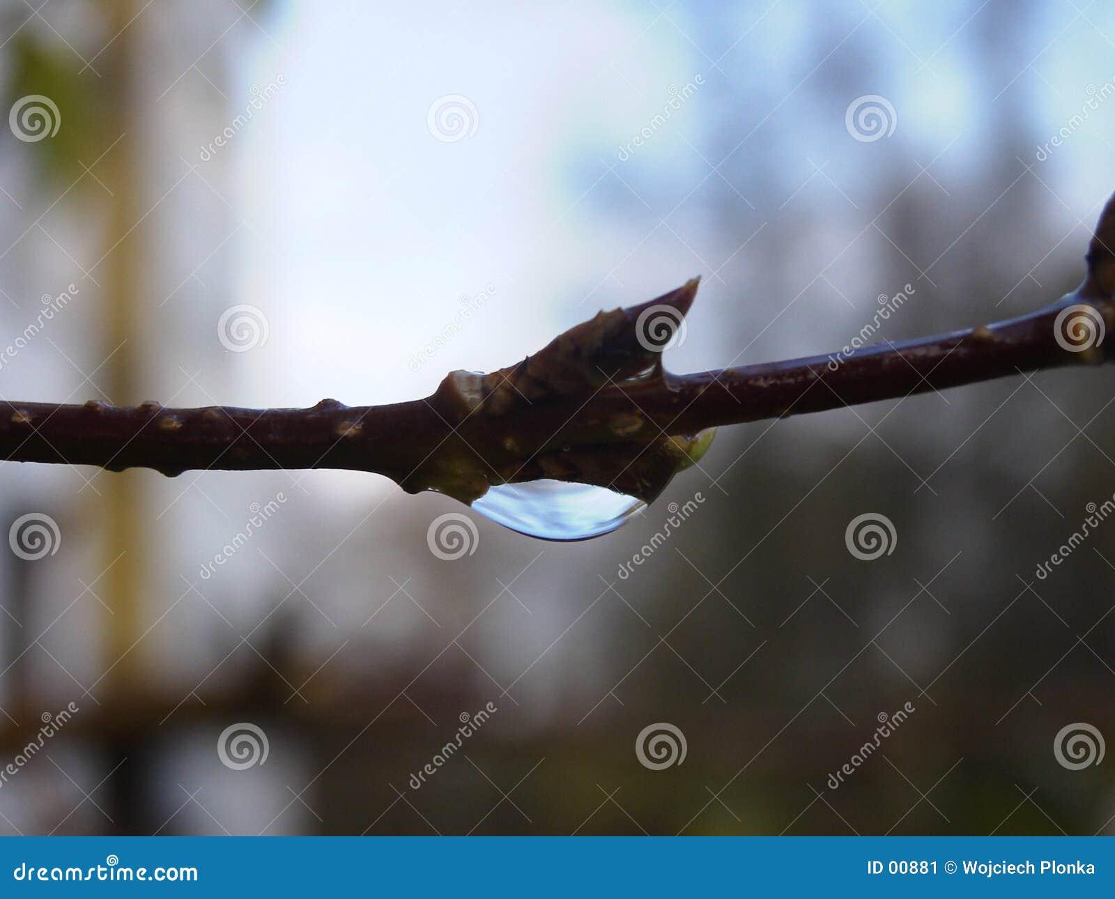 Nature tear