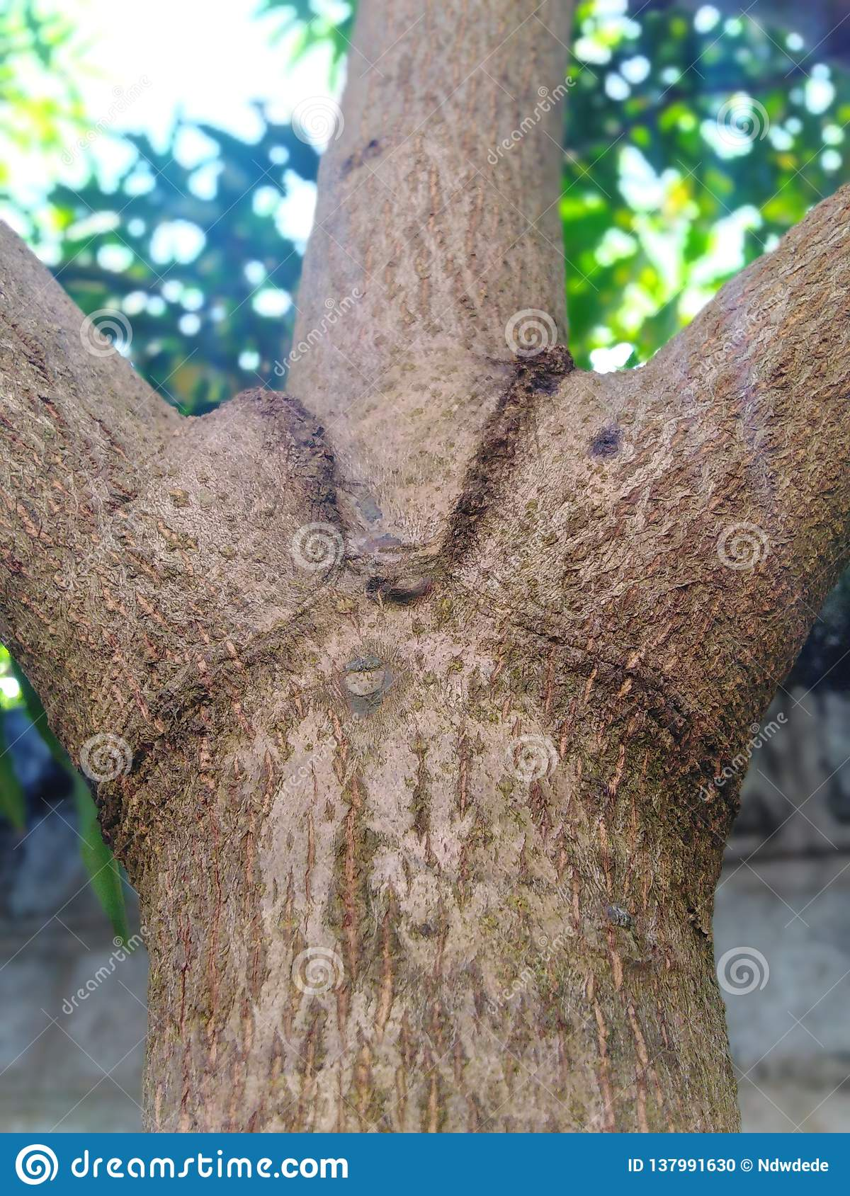 Nature tree trunk