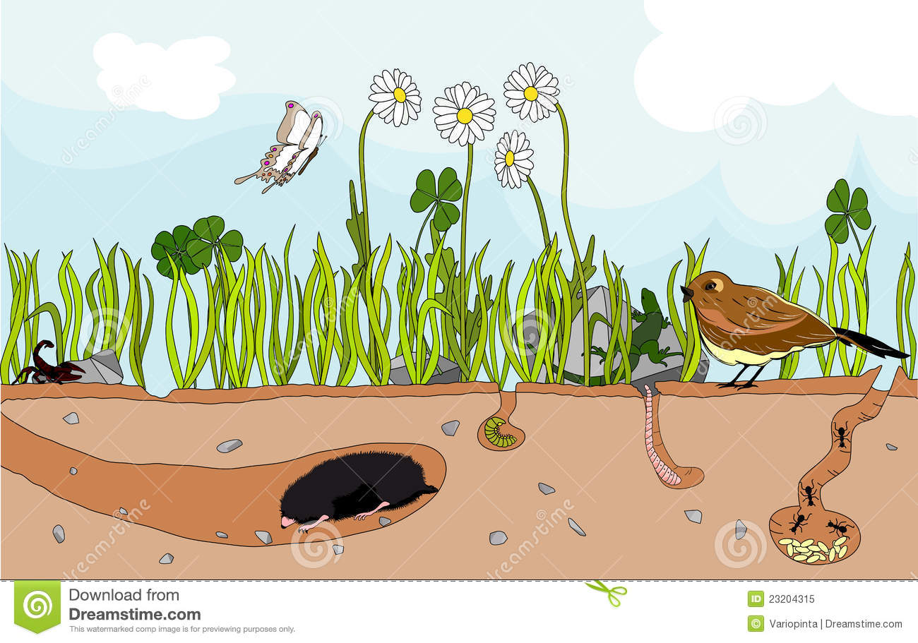 nature underground stock vector image of butterfly chipmunk clip art black and white chipmunk clip art black and white
