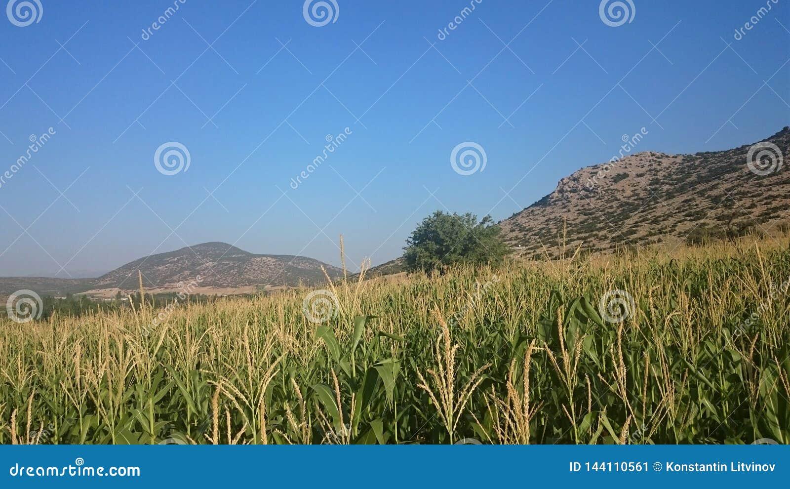 Nature verte de la Turquie un jour ensoleillé clair