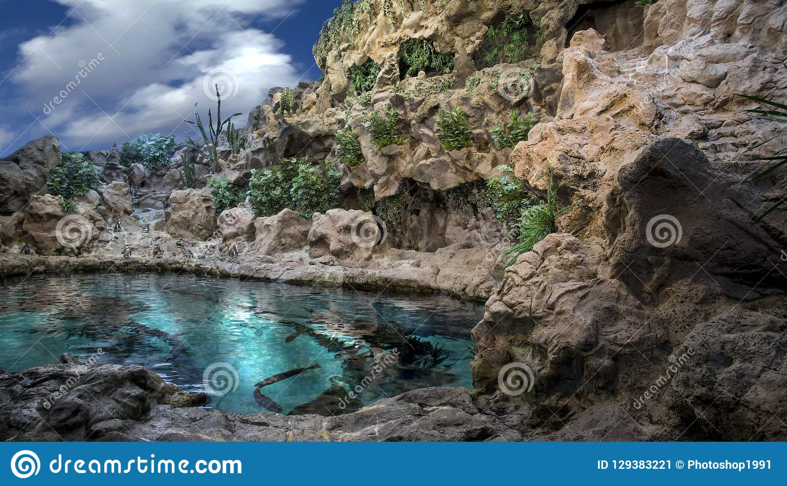 Nature water blue whit fish penguins mountain plants