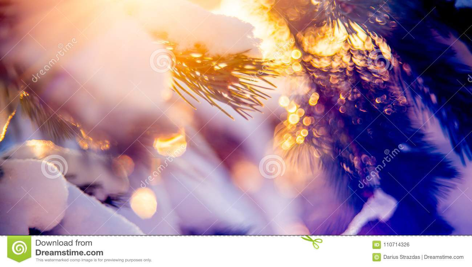 Nature winter detail macro