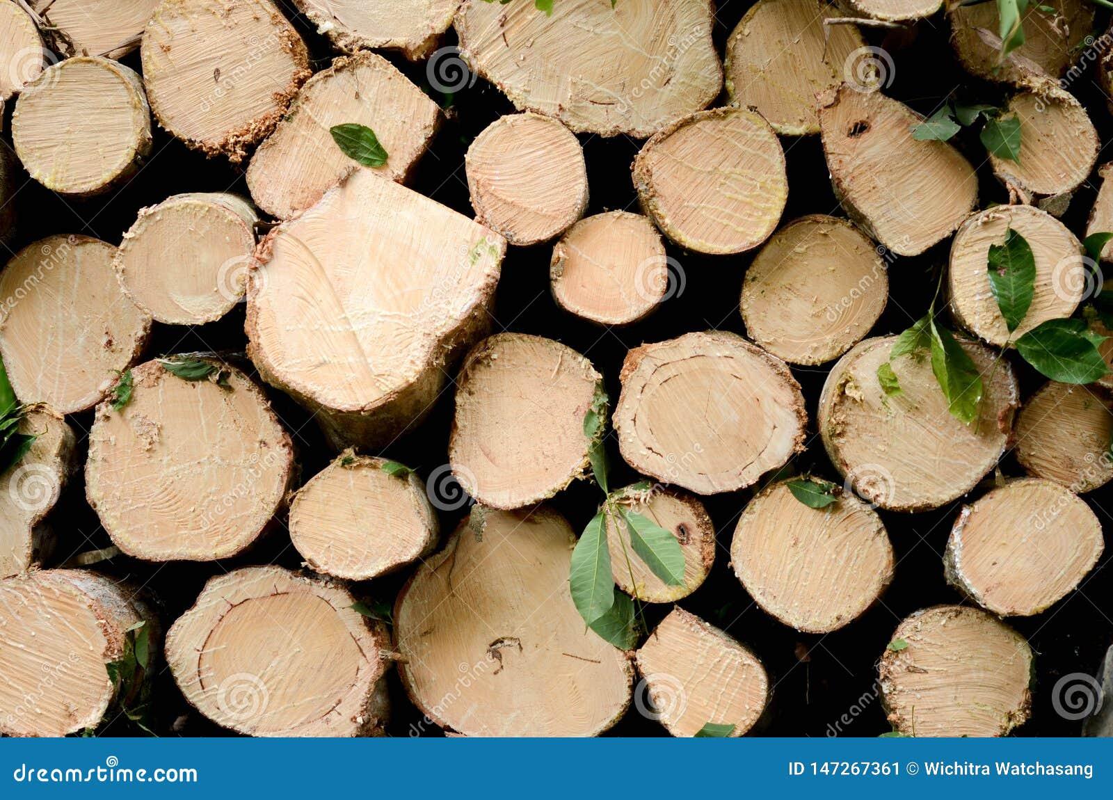 Naturel en bois frais a scié des rondins le plan rapproché, texture pour le fond, vue supérieure, photo étendue plate