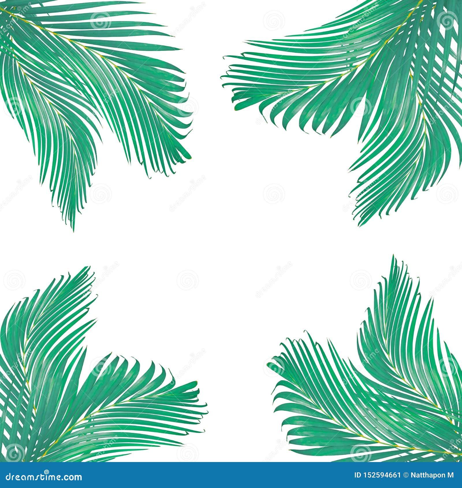 Naturen lämnar ramen för text som göras från den isolerade gröna palmbladet