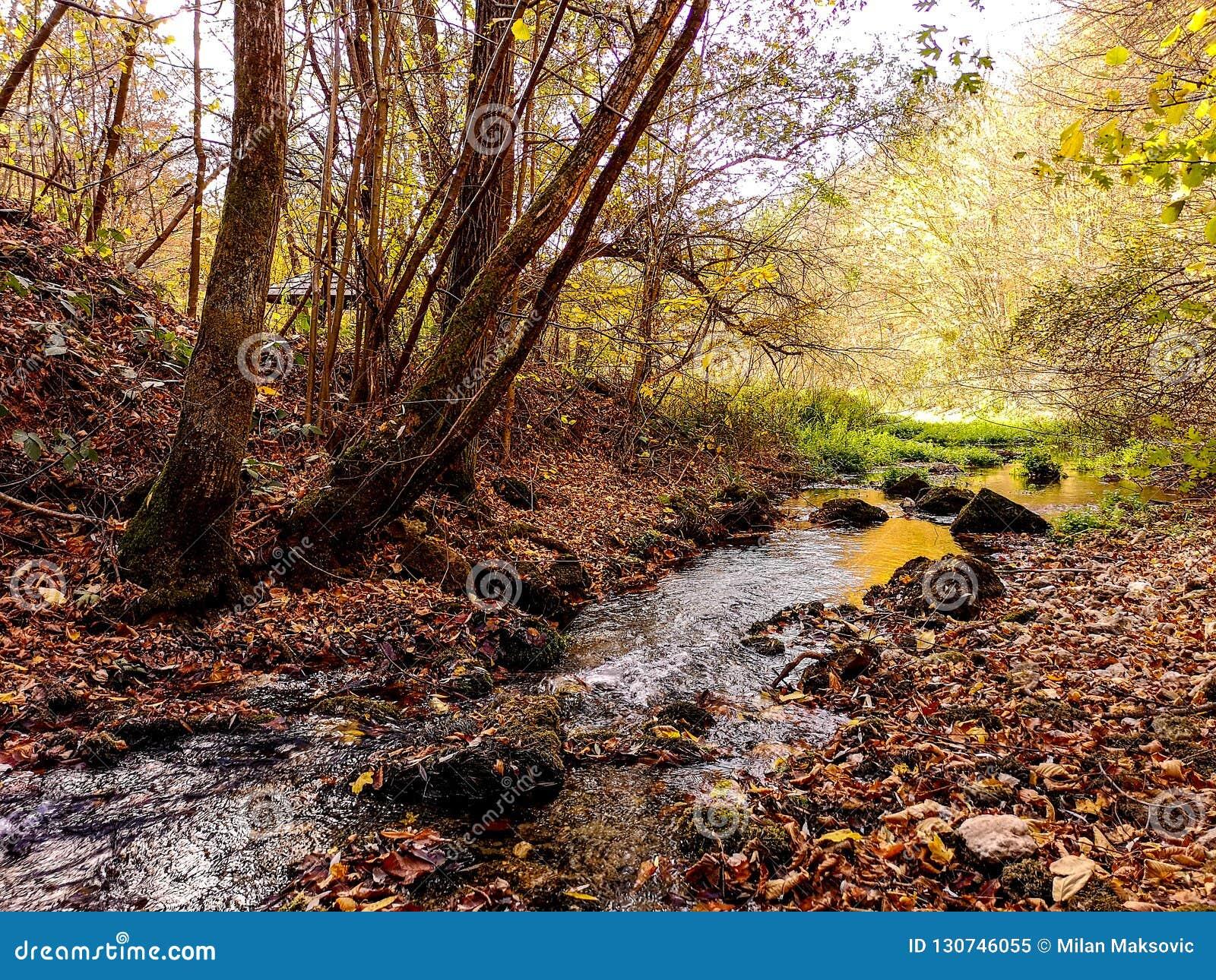 Naturen parkerar Grza nära Paracinen, Serbien