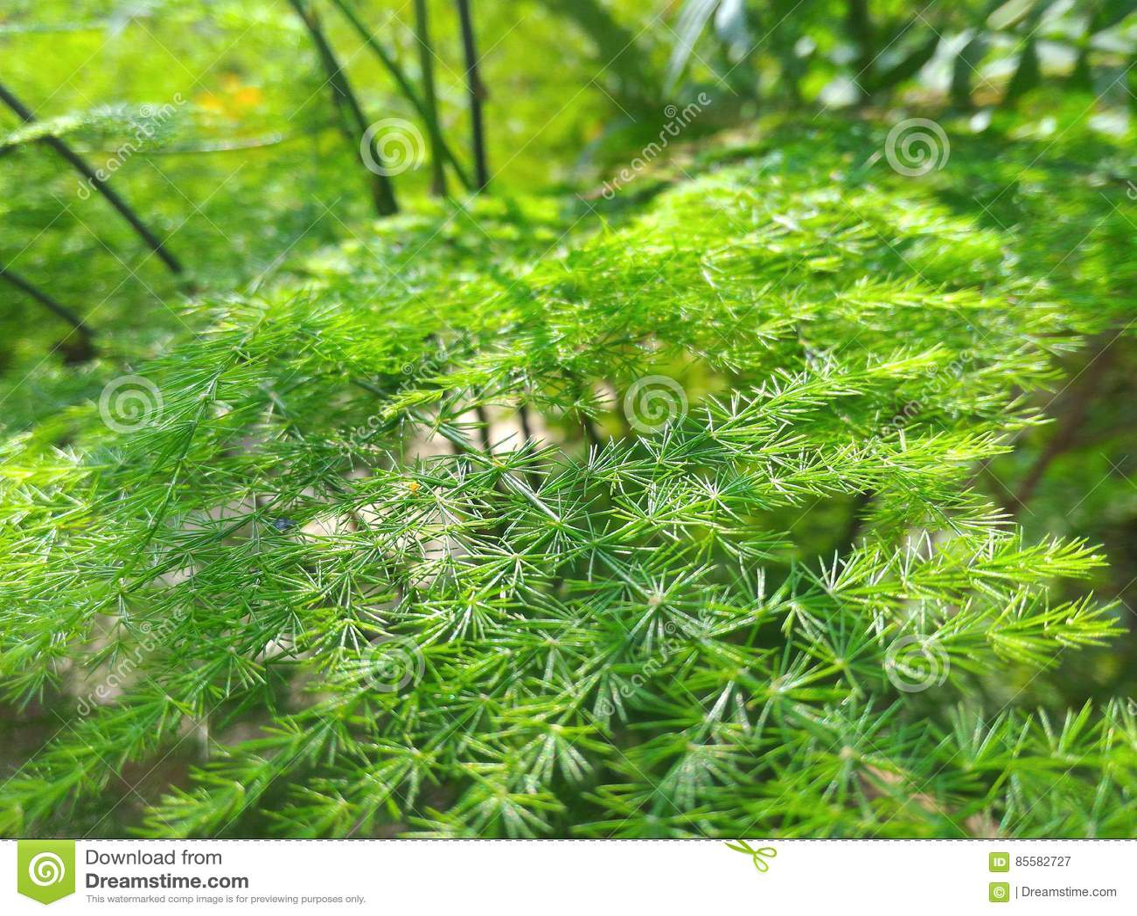 Naturen zoomade