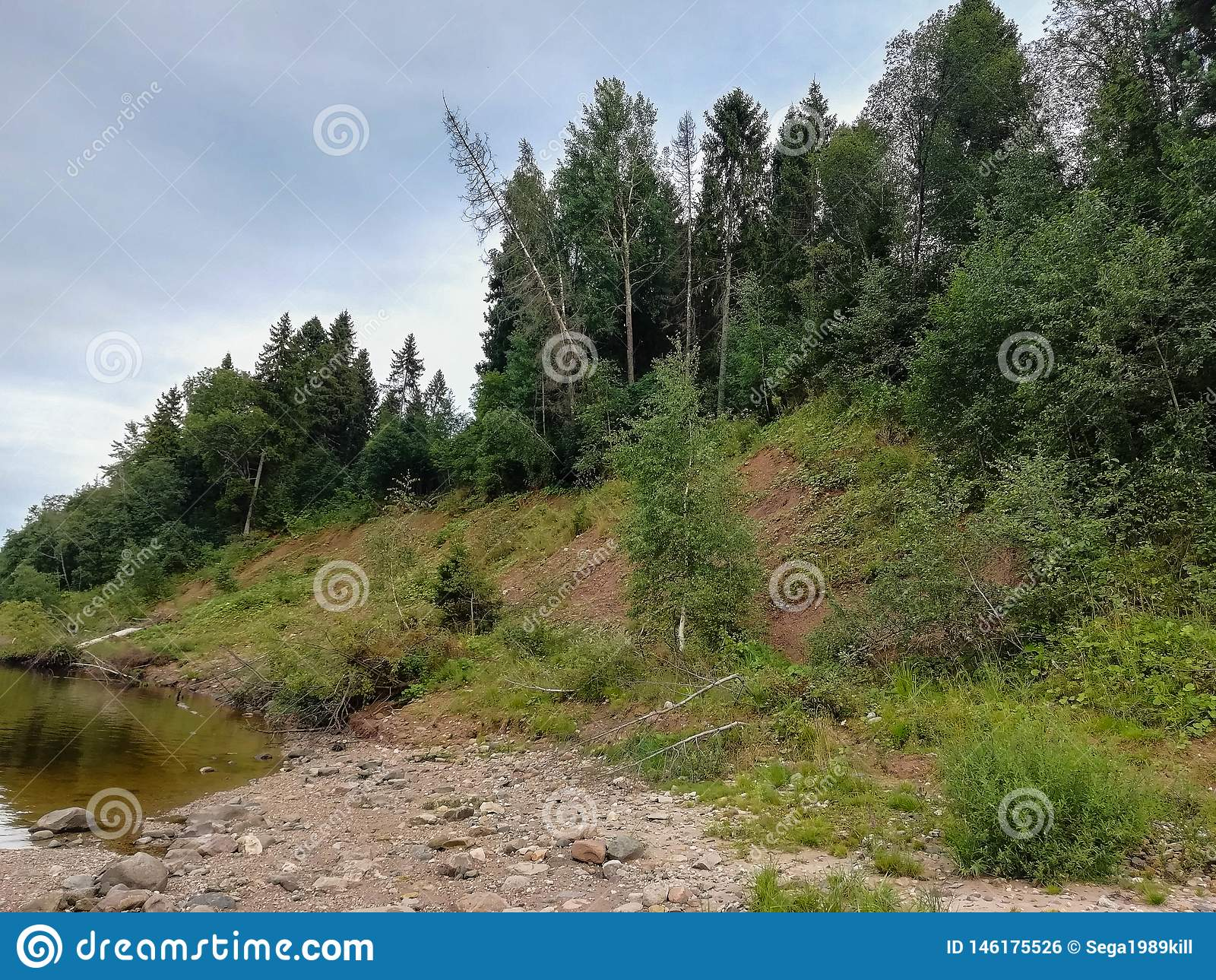 Natureza bonita de R?ssia florestas de R?ssia Tome da natureza 2