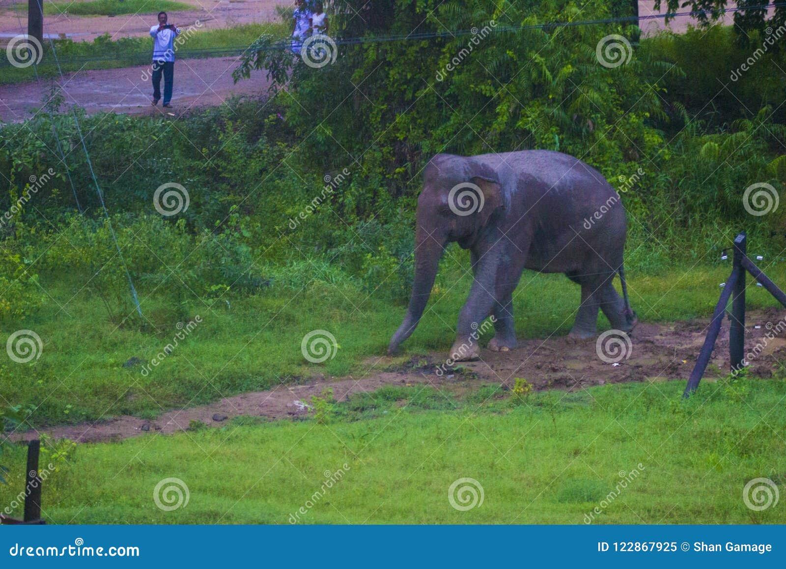 Natureza bonita de Sri Lanka