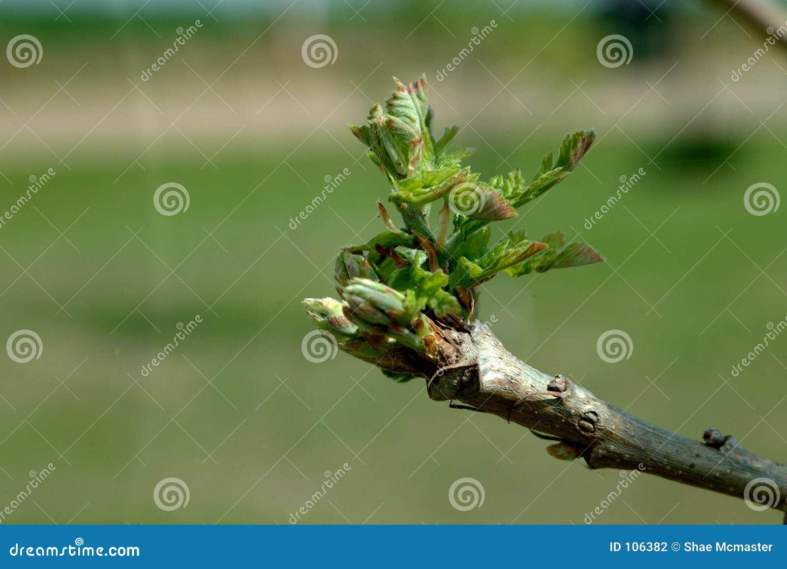 Natureza - começos novos