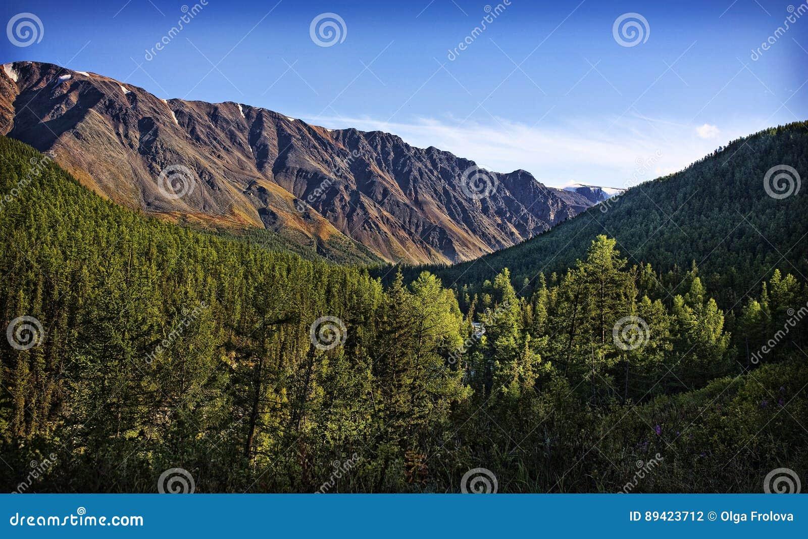 Natureza das montanhas de Altai