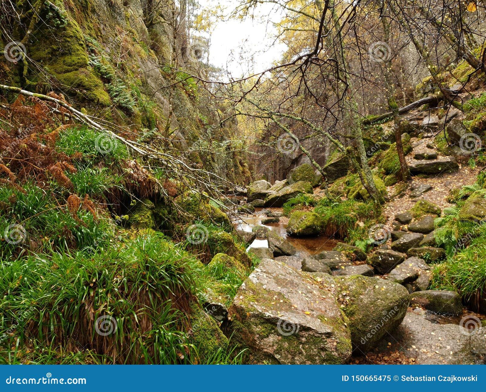 Natureza do fundo da floresta