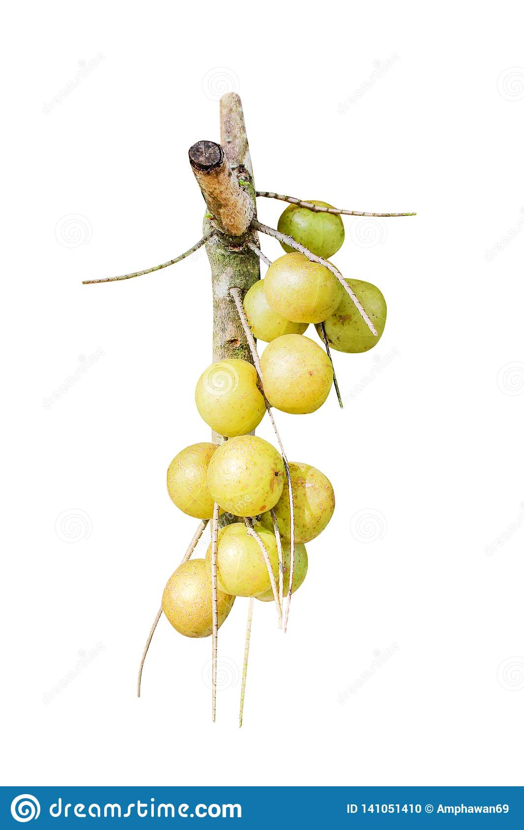 Natureza do grupo da groselha indiana ou do fruto orgânico do emblica do phyllanthus isolada no fundo branco com trajeto de gramp