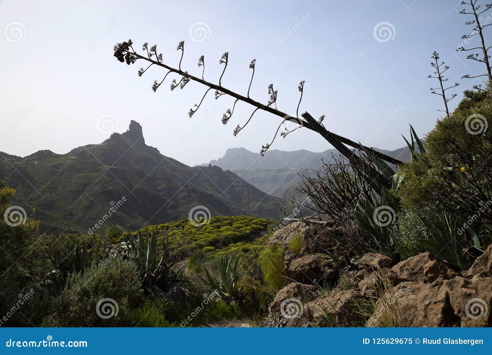 Natureza impressionante nas montanhas Cruz de Tejeda em Gran Canaria, Ilhas Canárias sob a bandeira espanhola