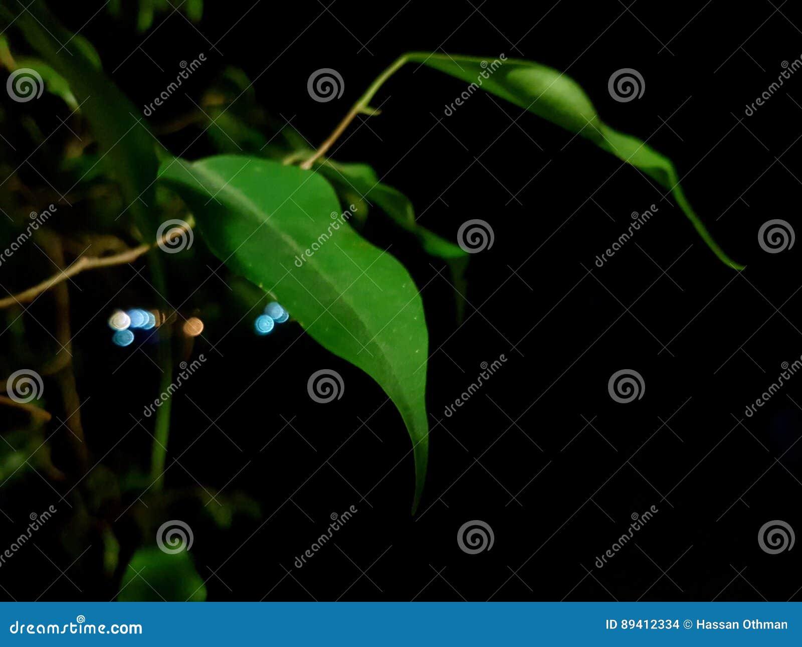 Natureza impressionante Qhd da noite