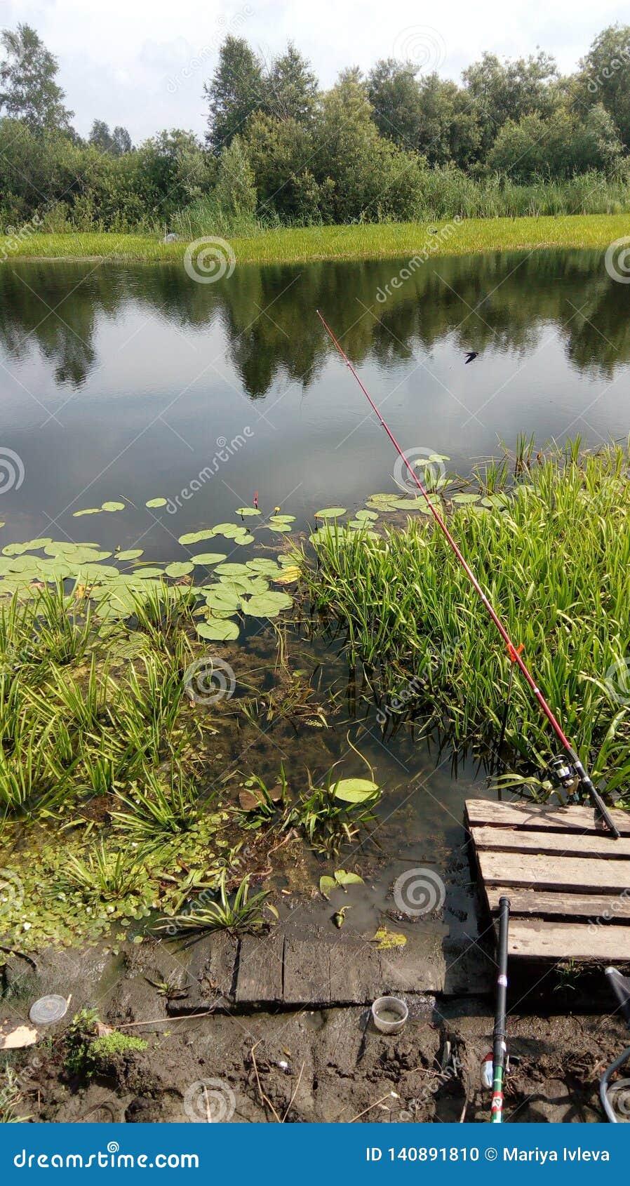 Natureza Siberian no verão