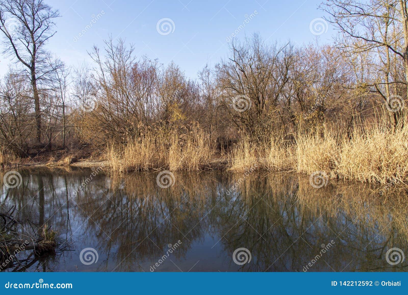 Naturfoto från Szigetköz i Ungern